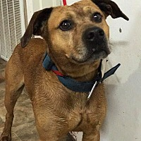 Adopt A Pet :: Gaelic - Lewisburg, TN
