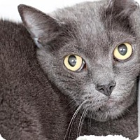 Adopt A Pet :: MIDNIGHT - Camarillo, CA