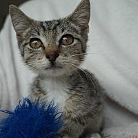 Adopt A Pet :: Bubbles - Lakeland, FL