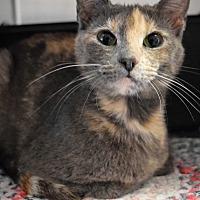 Adopt A Pet :: Barbara W - Richand, NY