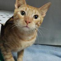 Adopt A Pet :: Idrees - Miami, FL