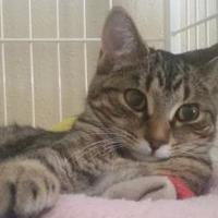 Adopt A Pet :: Wrigley - Waupun, WI