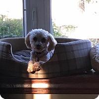 Adopt A Pet :: Celeste aka CeCe - Hazel Park, MI