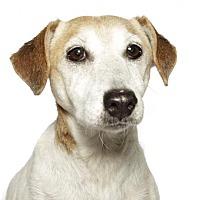 Adopt A Pet :: Milo - oakland park, FL
