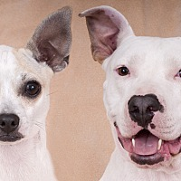Adopt A Pet :: Peaches & Petey - Chicago, IL