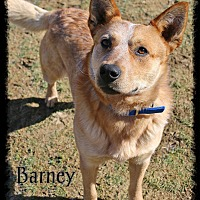 Adopt A Pet :: Barney - Shippenville, PA