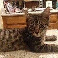 Adopt A Pet :: ZENON - Hampton, VA