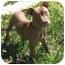 Photo 4 - American Staffordshire Terrier Mix Puppy for adoption in Berkeley, California - Eddie