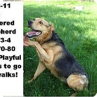 Adopt A Pet :: # 266-11 - ADOPTED! - Zanesville, OH