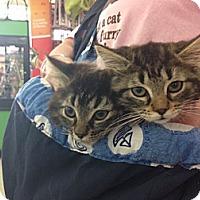 Adopt A Pet :: Sophia - Sterling Hgts, MI