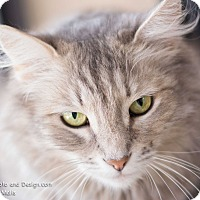 Adopt A Pet :: Suzy Q - Fountain Hills, AZ