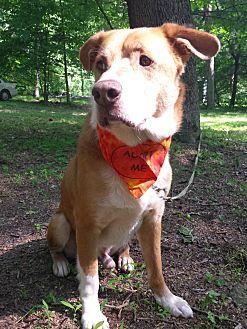 Australian Cattle Dog Mix Dog for adoption in Capon Bridge, West Virginia - Biscuit Basket