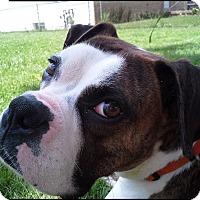 Adopt A Pet :: Leo Tiberius - Dayton, OH