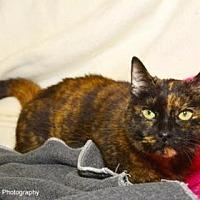 Adopt A Pet :: Grace - Neenah, WI