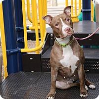 Adopt A Pet :: Bernadett- ADOPTION PENDING - Warrenville, IL