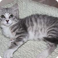 Adopt A Pet :: Jordan - Naperville, IL