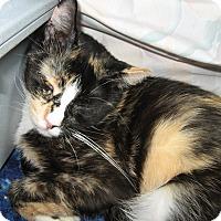 Adopt A Pet :: Trudie - Fallon, NV
