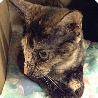Adopt A Pet :: Izzie - Phoenix, AZ