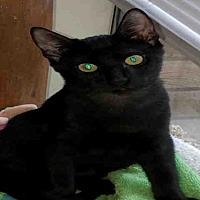 Adopt A Pet :: SPICE - San Antonio, TX