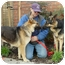 Photo 3 - German Shepherd Dog Dog for adoption in Los Angeles, California - Nessa von Nurnberg