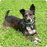 Adopt A Pet :: Bubbles - Mocksville, NC