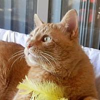 Adopt A Pet :: Tang - Prescott, AZ