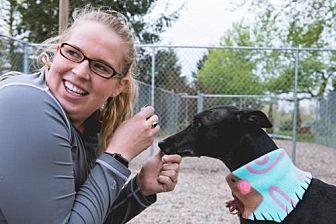 Greyhound Dog for adoption in Holland, Michigan - Travis