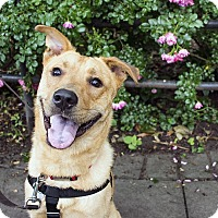 Adopt A Pet :: Bubba Watson - Jersey City, NJ