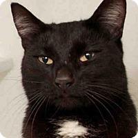 Adopt A Pet :: BAXTER - Camarillo, CA