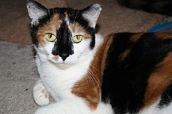 Calico Cat for adoption in Ephrata, Pennsylvania - Delilah