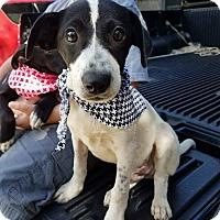 Adopt A Pet :: Wes - pending - Manchester, NH