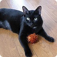 Adopt A Pet :: Prudence - Rohrersville, MD