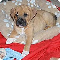 Adopt A Pet :: Aiden - Minneola, FL