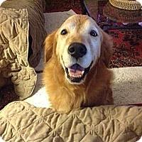 Adopt A Pet :: Ranger - New Canaan, CT