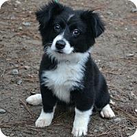 Adopt A Pet :: Molly - Athens, GA
