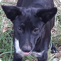 Adopt A Pet :: Dudley AD 04-18-17 - Preston, CT