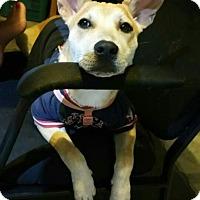 Adopt A Pet :: Loretta - La Mirada, CA