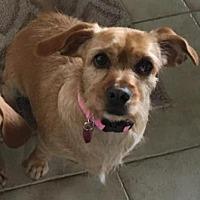 Adopt A Pet :: Penny - San Clemente, CA