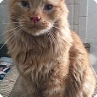 Adopt A Pet :: JINX - Washington, NC
