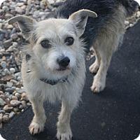 Adopt A Pet :: Boris - MEET ME - Bedminster, NJ
