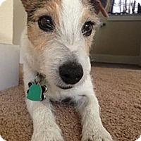 Adopt A Pet :: Toby in Austin, TX - Austin, TX