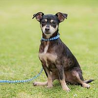 Adopt A Pet :: HEIDY - San Diego, CA