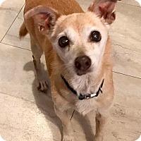 Adopt A Pet :: Taco - Holliston, MA