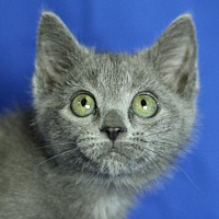 Adopt A Pet :: Chilla - Winston-Salem, NC