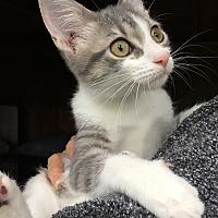 Adopt A Pet :: Zoe - Barrington, NJ