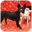 Photo 1 - Schipperke Mix Dog for adoption in Sugar Land, Texas - Bonnie