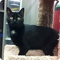 Adopt A Pet :: Halo - Warminster, PA