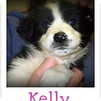 Adopt A Pet :: KELLY - Southport, NC