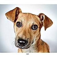 Adopt A Pet :: Mary - New York, NY