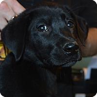 Adopt A Pet :: Finn - Prole, IA
